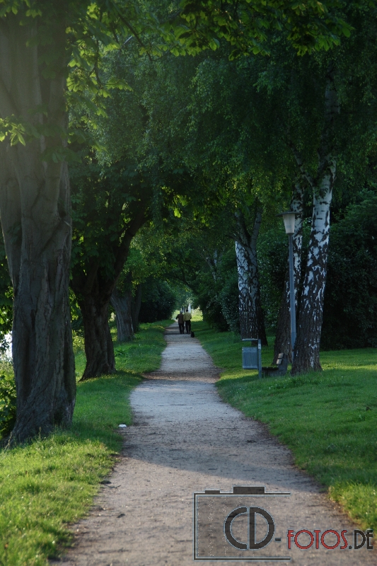 Ginsheimer-Altrhein im Sommer